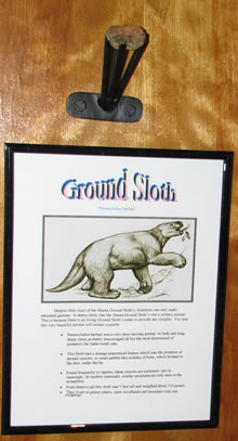 Ground sloth ossicle