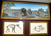 Paintings of gomphothere